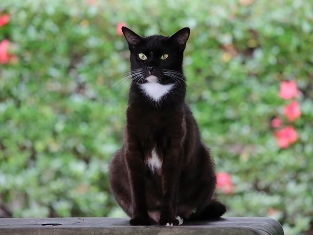 画像分類の予測サンプル画像(猫)